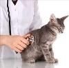 Ветеринарные клиники в Сонково